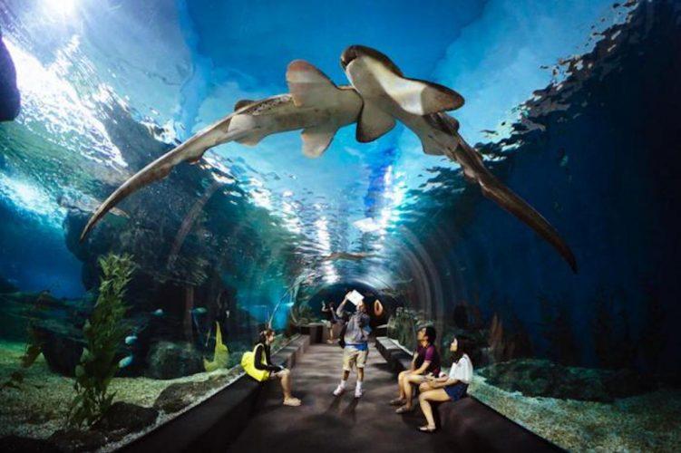 עולם הים בבנגקוק